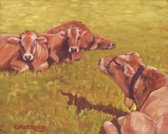Bovines in Austria, 8x10