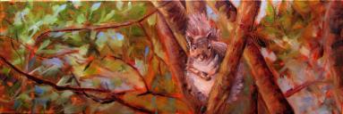 squirrellee12x24