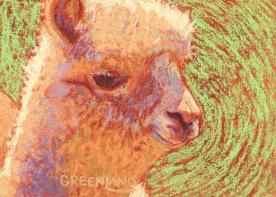 Alpaca Cria, pastel on gatorboard, 5x7