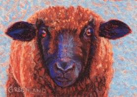 Black-faced Sheep, pastel on gatorboard, 5x7