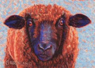 Black-faced Sheep, pastel on gatorboard, 5x7