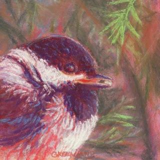 Chickadee Portrait, pastel on gatorboard, 6x6