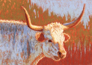 LongHorn Cow, pastel on gatorboard, 5x7