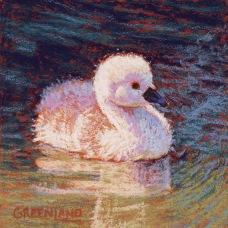 SOLD Swan Cygnet, pastel on gatorboard, 6x6