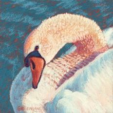 SOLD Female Swan, pastel on gatorboard, 8x8