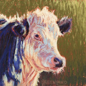 Whiteface Cow, pastel on gatorboard, 6x6
