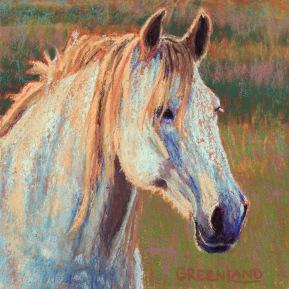 White Horse, pastel on gatorboard 8x8